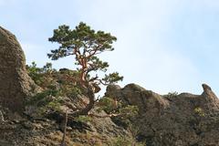 Stock Photo of tree on rocks top