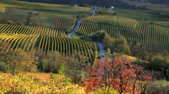 Vineyards, nr Alba, Langhe, Italy - stock footage