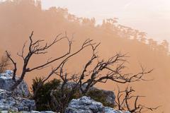 daybreak landscape - stock photo