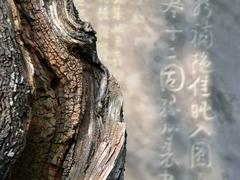 Zen abstract image Stock Photos