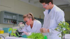 Chemists looking through microscope Stock Footage