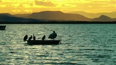 Boat and birds in the sunset Stock Footage