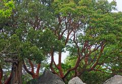 Stock Photo of trees on mountaunside