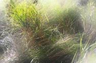 Autumn grass. Stock Photos