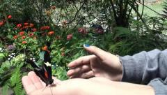 Butterfly on Person's Hand Stock Footage