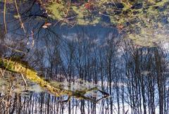 fantasy of reflection - stock photo