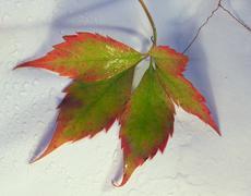 Stock Photo of autumn leaf