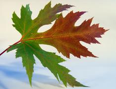 Stock Photo of autumn leaf