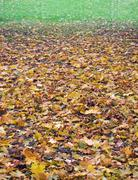 Stock Photo of autumnal gradient (2)