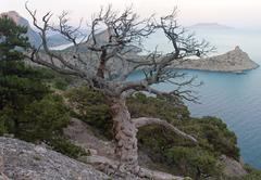 tree and coast - stock photo