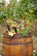 vineyard and white wine.JPG - stock photo