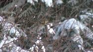 Bird in tree Stock Footage