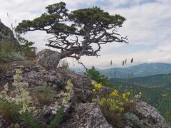 tree on mount - stock photo