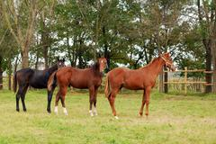 Horses225.JPG Stock Photos