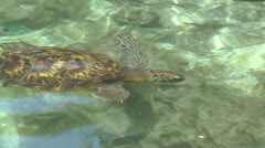 Water turtle Stock Footage