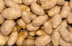russet baking potatoes on display - stock photo