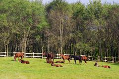 herd of horses in coral.JPG - stock photo