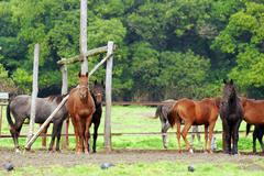 Horses in coral55.JPG Stock Photos