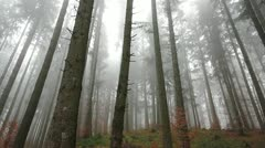 Misterious forest - stock footage