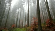 Misty atmosphere in the woods Stock Footage