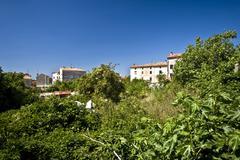 Lush greenery in Galizana Stock Photos