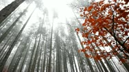 Autumn wide-angle in forest Stock Footage