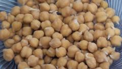 Sprouted chickpeas close up zoom out Stock Footage