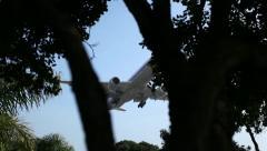 Large Airline Landing Thru Trees - stock footage