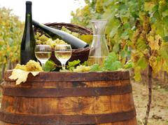 vineyard with white wine and bottles.JPG - stock photo