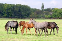 herd of horses45.JPG - stock photo