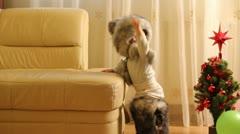 Poikavauva yrittää kovasti ottaa pois hänen karvalakki Arkistovideo