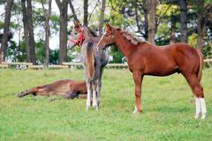 two young horses on pasture.JPG - stock photo
