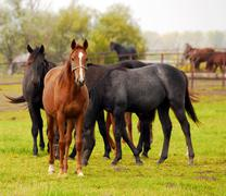 Horses herd.JPG Stock Photos