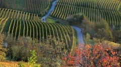 Scenic vineyards, nr Alba, Italy Stock Footage