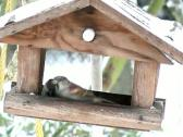 Stock Video Footage of birds in a birdhouse