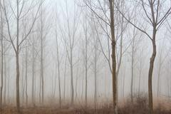 Stock Photo of winter forest mist.JPG