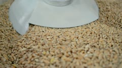 Grain (wheat seeds) under press, technology details Stock Footage