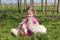 Two little goat and child.JPG Stock Photos