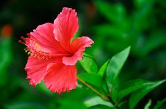 big red flower with green background - stock photo