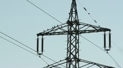 Common starlings (Sturnus vulgaris) on a high voltage power line Stock Footage