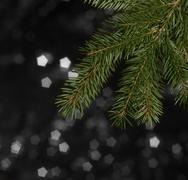 Green fir branch detail Stock Photos