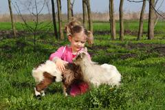 child play with little goats.JPG - stock photo
