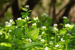 Nettle flower.JPG Stock Photos