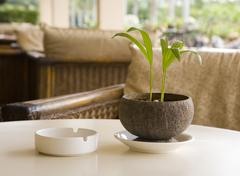 Coffee table with ash-tray and plant - stock photo