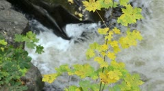 Norway maple (Acer platanoides) at a mountain brook, Bode Valley Nature Reserve, Stock Footage