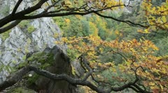 Oak (Quercus), Bode Valley Nature Reserve, Germany Stock Footage