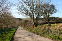 country lane narrow b road in cornwall, uk. - stock photo