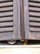 Cats on the window Stock Photos