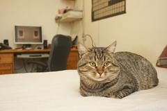 Cat on the bed Stock Photos