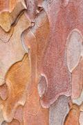 Stock Photo of pine bark